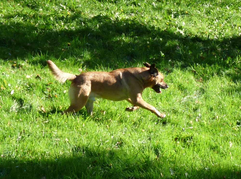 chien-fugue