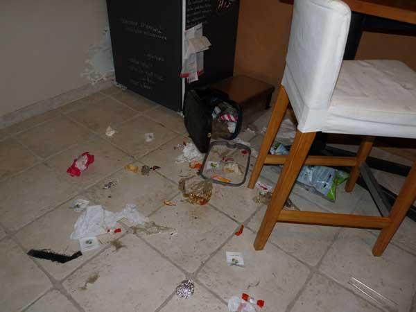 Mon chien mange dans la poubelle